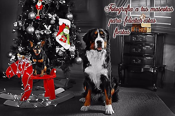 Foto de Mascota personalizada_1