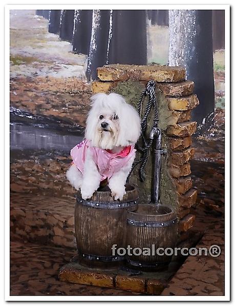 Foto de mi mascota_11