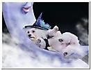 Foto de mi mascota_14