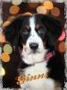 Foto de mi mascota_1