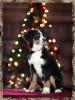 Foto de mi mascota_4