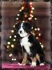 Foto de mi mascota_5